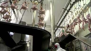 Frigorífico de SC quer voltar a exportar patos pra Arábia Saudita - O descredenciamento ocorreu no mês passado e pegou a empresa de suspresa. A direção diz que não houve vistoria e, mesmo assim, o frigorífico está entre os que foram descredenciados. 30% do que a empresa exporta vai pra Arábia Saudita.