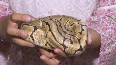 Um pet para chamar de meu: Já pensou em ter cobras de estimação? Saiba os cuidados - Um pet para chamar de meu: Já pensou em ter cobras de estimação? Saiba os custos.