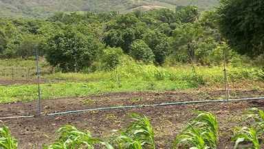 Chuva ameniza transtornos causados pela seca em Sergipe - Chuva ameniza transtornos causados pela seca em Sergipe.