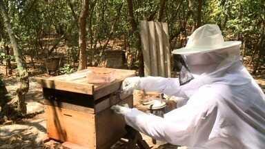 Cresce investimentos no setor de apicultura em Alagoas - Veja a reportagem.