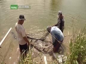 Psicultores do Vale do Pindaré estão otimistas com o crescimento da atividade - A produção cresceu tanto nos últimos anos que a região se tornou referência na criação de peixes.