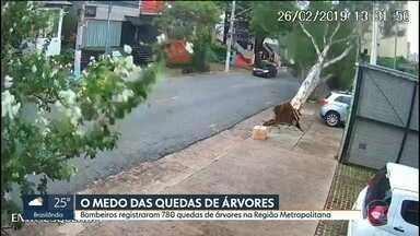 780 árvores caíram entre ontem e hoje na Região Metropolitana - Morador do Sumaré espera há dois anos remoção de árvore condenada pela Prefeitura.