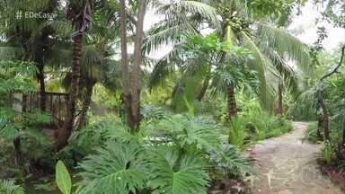 Zeca Camargo visita coleção de coqueiros! - Bruno tem mais de 30 coqueiros no quintal