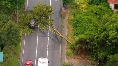 Seguro paga queda de árvore em cima do carro? Entenda - Saiba se o motorista tem culpa por deixar o veículo embaixo de árvores.