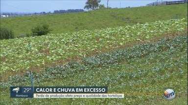 Chuva em excesso causa perda de produção e aumento no preço de hortaliças - Quantidade chuva afetou a produção de legumes e verduras. Impacto será sentido no preço final.