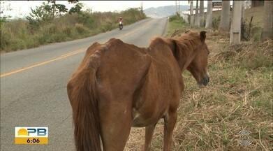 Animais na pista são um perigo no trânsito - Dois cavalos estavam soltos na entrada do bairro Costa e Silva em direção à BR-230.