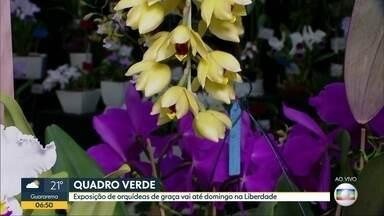 Quadro verde - Exposição de orquídeas de graça vai até domingo na Liberdade