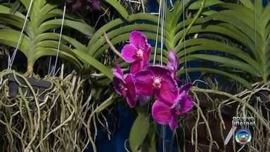 Feira de orquídeas é realizada em comemoração ao aniversário de Rio Preto - Começa nesta sexta-feira (SP) uma feira de orquídeas em São José do Rio Preto (SP) em comemoração ao aniversário da cidade.