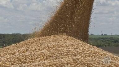 Preço compensa perdas nas lavouras de soja; colheita está na reta final - Preço compensa perdas nas lavouras de soja; colheita está na reta final.