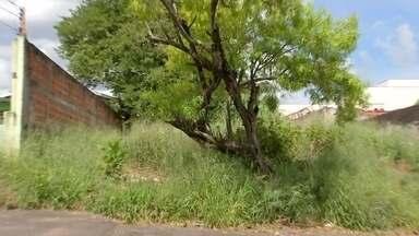 Prefeitura de Bauru inicia identificação de terrenos sujos na cidade - A prefeitura de Bauru já identificou mais de 1 mil terrenos com mato alto e os donos que não tomaram providência vão pagar a multa e a conta dessa limpeza. Toda essa área sem cuidados vai arrecadar mais de R$ 12 milhões em multas.