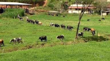Alimentação e genética são pontos importantes para o aumento na produção de leite - Alciro Lazzarini, coordenador do Incaper no Sul do Estado, explica o diferencial destes cuidados com o gado.
