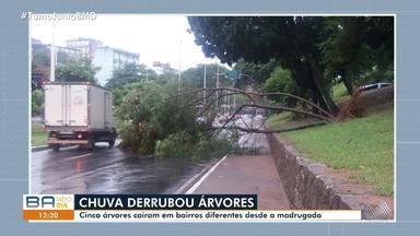 Chuva: cinco árvores caem em bairros diferentes desde a madrugada - Uma árvore caiu na ladeira da Cruz da Redenção e outra na Pituba; motoristas precisam ter atenção.