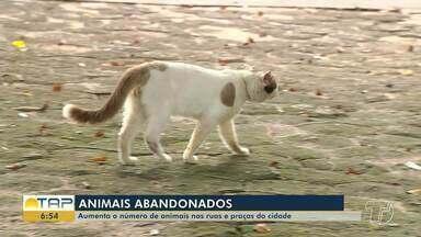 Grande número de animais abandonados nas ruas de Santarém revela descaso - O abandono dos animais é preocupante, pois doenças como o Calazar são transmitidas pelos cães. População descarta os animais, situação é recorrente na cidade.
