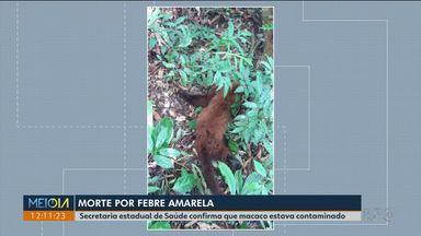 Secretaria de Saúde confirma morte de macaco por febre amarela em Castro - Pessoas de 9 meses a 59 anos devem ser imunizadas com a vacina.