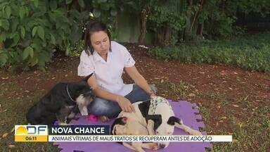 Cachorros vítimas de maus tratos se recuperam antes de serem adotados - A cadela Vitória foi encontrada no dia 8 de março com ferimentos dentro de uma mala fechada no Núcleo Rural Córrego do Urubu, próximo ao Lago Norte.