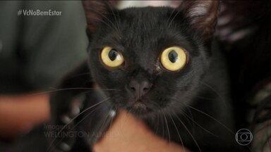 Bem Bicho: gato preto - A chegada dos gatinhos pretos às telas (na novela 'O Último Guardião) ajudou a derrubar preconceitos. Na trama, o gato é o herói da novela.