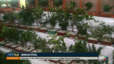 Até dia 14 de abril tem Fest Flores no antigo Terminal Oeste - Além de flores também tem outros materiais para jardinagem.