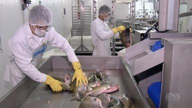 Venda de peixes cresce em até 40% no período de Quaresma, em Goiás - Psicultores investem em maiores reservatórios para aumentar a produção de peixes.