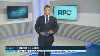 Bandidos roubam mais de 20 cabeças de gado de propriedade rural de Paranavaí - Suspeitos ainda não foram identificados.