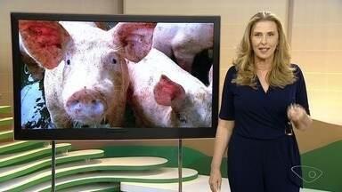 Idaf faz monitoramento para comprovar ausência de peste suína no ES - O trabalho está sendo feito desde o mês passado e vai ser realizado em 80 granjas comerciais, em 33 municípios capixabas.