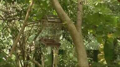 No Parque do Cocó, projeto 'Passarinhar' é opção de lazer para o domingo - Confira mais notícias em g1.com.br/ce