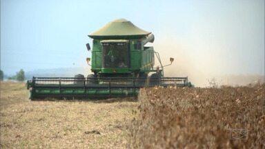 Instabilidades climáticas prejudicam produção de soja no sul do Maranhão - Primeiro foi a estiagem do final do ano passado, que reduziu a produtividade. Agora está chovendo na região, o que torna a colheita mais difícil.