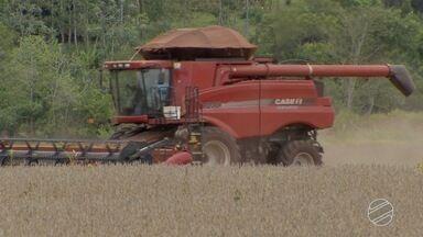 Produtores terminam colheita de soja em MS - Duas estiagens prejudicaram o rendimento das lavouras, mas preços compensaram as perdas.