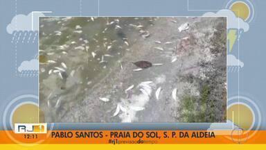 Imagens enviadas por telespectador mostram peixes mortos na Lagoa de Araruama - Vídeo foi gravado no sábado (14), na Praia do Sol, em São Pedro da Aldeia.