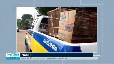Polícia Militar apreende 98 pássaros silvestres mantidos em cativeiro em Naque - Aves estavam presas em gaiolas dentro de uma casa, e o dono do imóvel foi preso em flagrante; pássaros foram encontrados após denúncias anônimas da população.