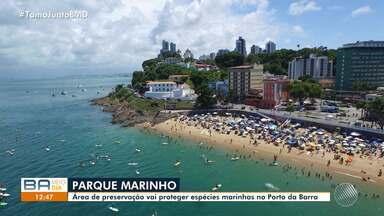 Projeto transforma Porto da Barra em área de preservação de espécies marinhas - O acordo prevê que animais marinhos que vivem no locais sejam protegidos da ação humana.