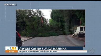 Árvore de grande porte cai na rua da Marinha, em Belém - Trânsito ficou totalmente bloqueado.