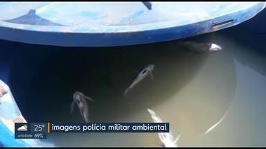 Polícia apreende 300kg de peixe vendidos de forma irregular - As tilápias estavam armazenadas em caixas d´água sem oxigenação, próximo a uma feira em São Sebastião.