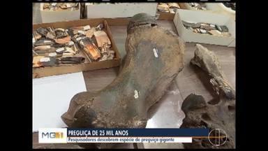 Pesquisadores descobrem espécie nova de preguiça gigante - Espécie foi encontrada pela equipe da PUC Minas.