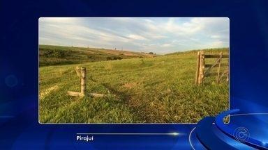 Ladrões furtam 68 cabeças de gado em fazenda de Pirajuí - Segundo o boletim de ocorrência, foram levados 14 bezerros e 54 vacas de propriedade localizada às margens da Rodovia Marechal Rondon. Ninguém foi preso.