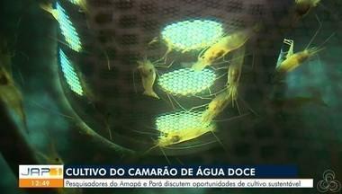 Cultivo de camarão de água doce na região norte reúne pesquisadores - Pesquisadores do Amapá e Pará discutem oportunidades de cultivo sustentável.