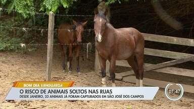 Moradores de São José reclamam de animais abandonados nas ruas - Situação oferece riscos.