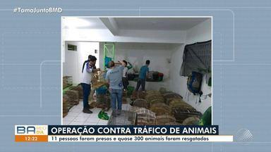 Operação contra o tráfico de animais prende 11 pessoas no norte do estado - Quase 300 animais foram resgatados.