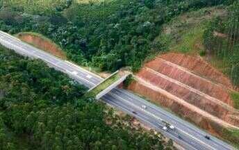 Caminho para a natureza - Túneis debaixo de rodovias ligam áreas de matas e tornam-se corredores da vida selvagem.