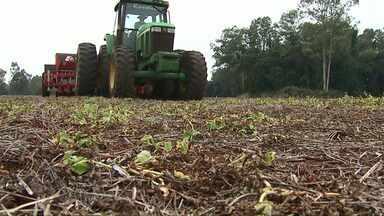 Assista ao bloco 02 do Caminhos do Campo do dia 19 de maio de 2019 - Área de trigo deve ser menor este ano, mas a produção pode crescer