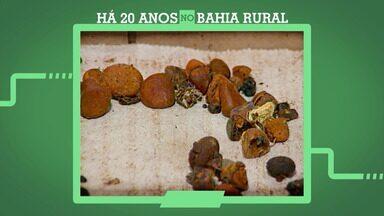 'Há 20 anos no Bahia Rural': relembre a produção de jóias com feitas com a bile do boi - O programa vai completar mil edições neste ano.
