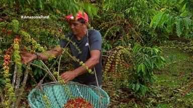 Parte 1: Veja como a produtividade do café do AM pode ser aumentada - Expectativa para safra de 2019 é de rendimento de até cem sacas por hectare.