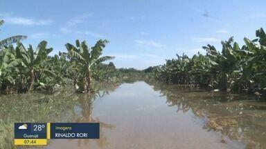 Produtores de banana perdem produção por causa da chuva no Vale do Ribeira - Moradores da zona rural de Miracatu relatam o prejuízo.