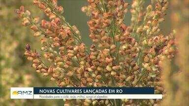Embrapa apresenta experimentos de novas cultivares em Rondônia - São novidades para o café, soja, milho, sorgo e algodão cultivados no interior do Estado