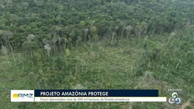 Programa 'Amazônia Protege' identifica áreas e responsáveis por desmatamento - Dados apontam que áreas desmatadas aumentaram.