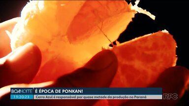 Cerro Azul quer conquistar o título de Capital Nacional da Ponkan - A cidade é responsável por quase metade da produção da fruta do Paraná.