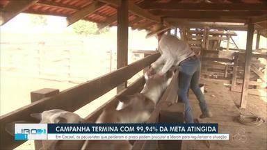 Em Cacoal, campanha de vacinação contra a febre aftosa fecha com 99,94% da meta atingida - Os pecuaristas que perderam o prazo podem procurar a Idaron para regularizar a situação