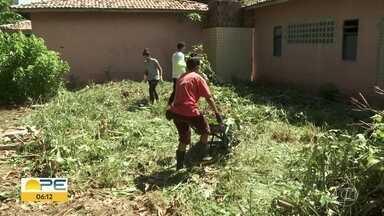 Estudantes e moradores de Brasília Teimosa se unem para transformar escola - Semana do Meio Ambiente começa nesta segunda (3).