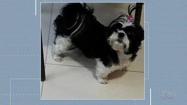 Família procura cadela que desapareceu em Aparecida de Goiânia - Dona está desesperada.