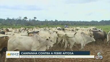 Campanha contra febre aftosa é prorrogada no Amazonas - Campanha contra febre aftosa é prorrogada no Amazonas