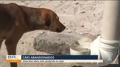 Moradores se unem para alimentar cães de rua em Teixeira de Freiras, no extremo sul - Os comedouros públicos ajudam cachorros abandonados.